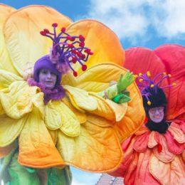 Stelzenläufer die Blumen